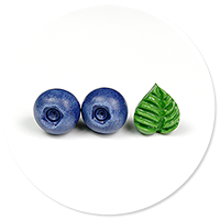 plug-in earrings blueberries and leaf